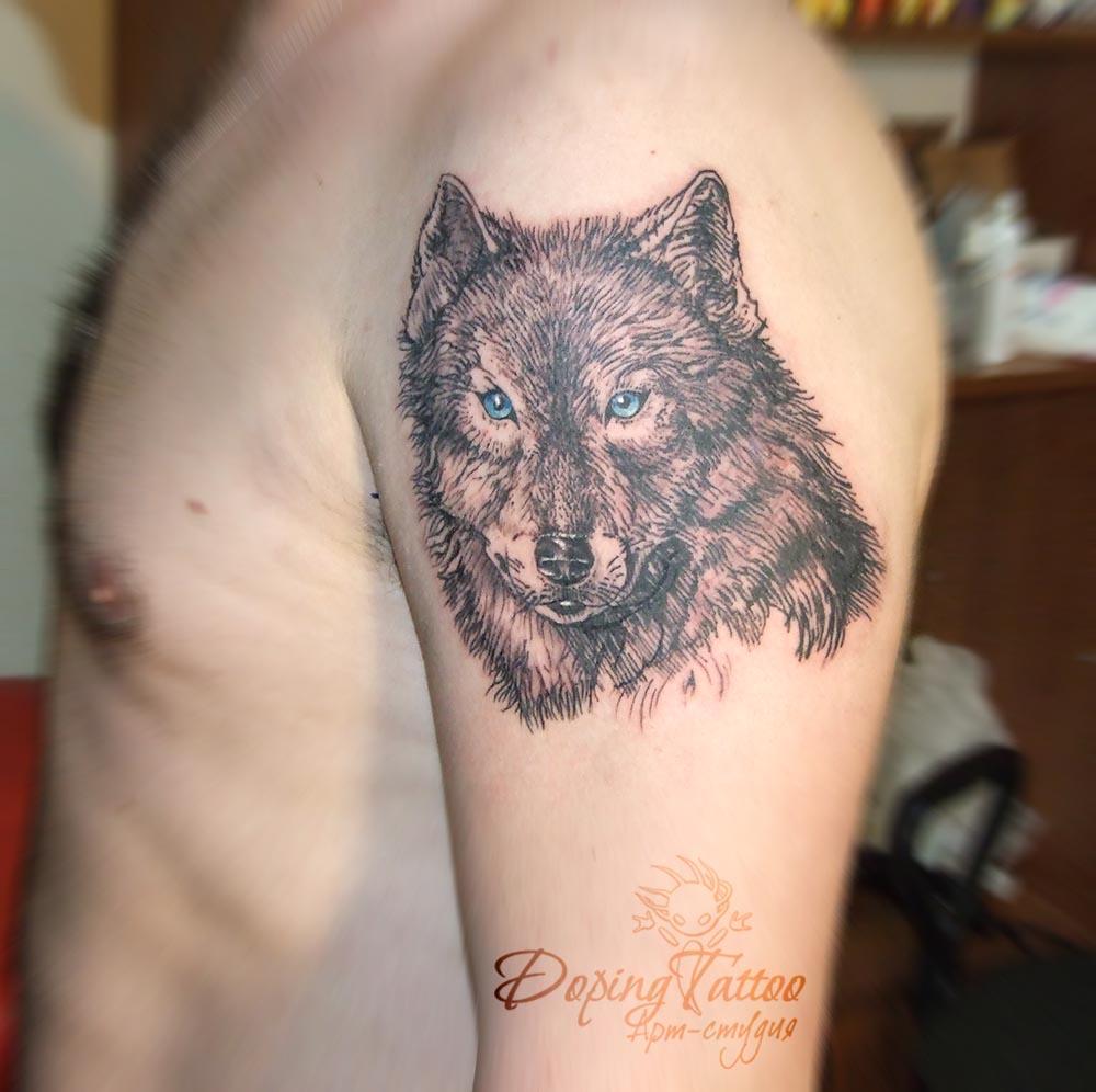 20_wolf