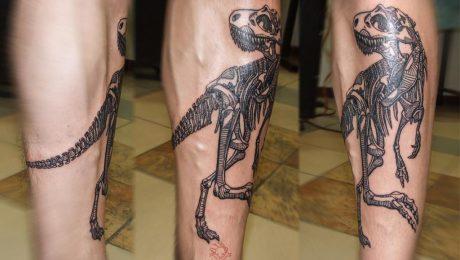 Скелет динозавра (trex)