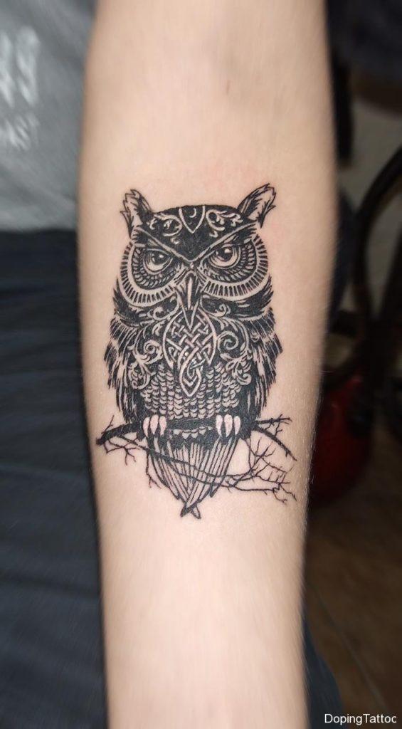 26_owl1